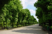 Picture of Path in a Vienna park - Austria