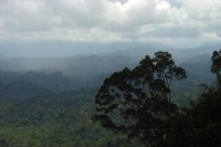 Foto van View over the Brunei jungle - Brunei