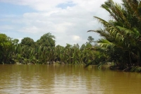 Foto de Vegetation by Brunei River - Brunei