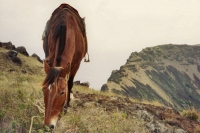 Photo de Horse on Easter Island - Chile