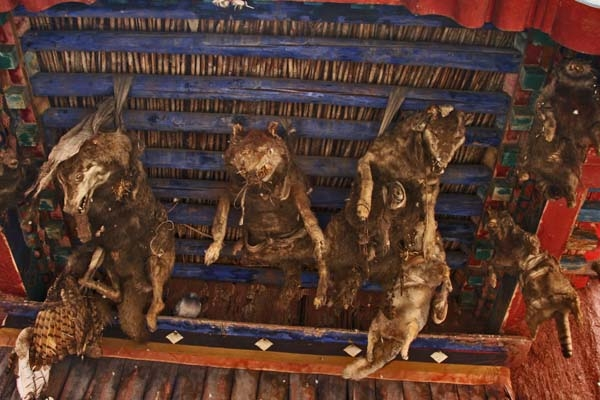 Stuur foto van Protective deities in the form of stuffed wolfs at Sakya monastery van China als een gratis kaart