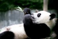 Faire clic pour agrandir foto de Animaux - Chine