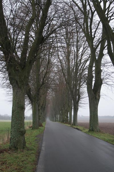 Send picture of Country road on Zealand from Denmark as a free postcard
