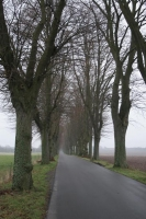 Picture of Country road on Zealand - Denmark