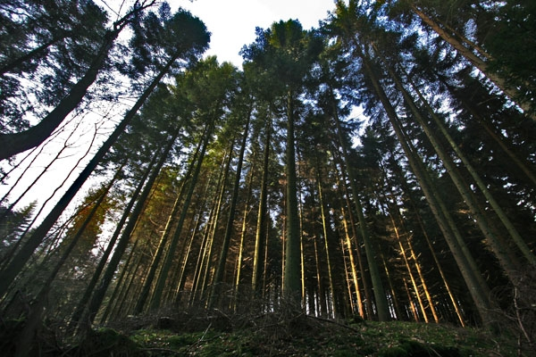 Send picture of Forest in eastern Jutland from Denmark as a free postcard