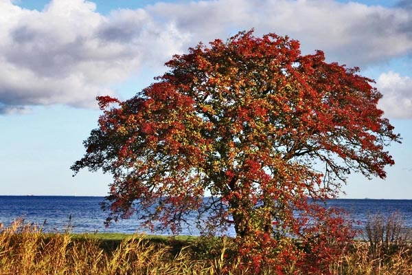 Send picture of Fall colors in Copenhagen from Denmark as a free postcard
