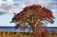 Fai clic per ingrandire foto di Clima in Danimarca