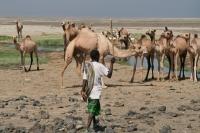Faire clic pour agrandir foto de Animaux - Djibouti