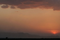 Picture of Setting sun and a camel in the desert near Dikhil - Djibouti