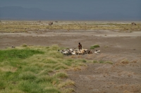 Photo de A shepherd tending her goats near Lac Abbé - Djibouti