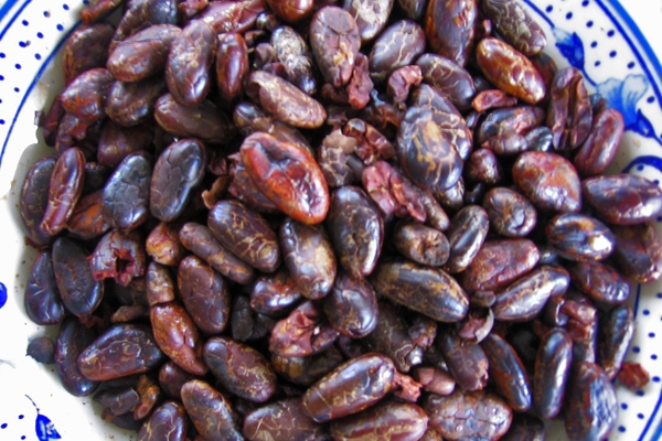 Send picture of Puerto Quito, Pichincha: Cacao beans from Ecuador as a free postcard