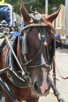 Foto van Horse drawing a carriage in Alexandria - Egypt