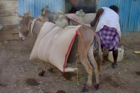 Picture of Animals in Eritrea