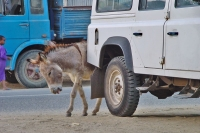 Photo de Donkey in Asmara - Eritrea