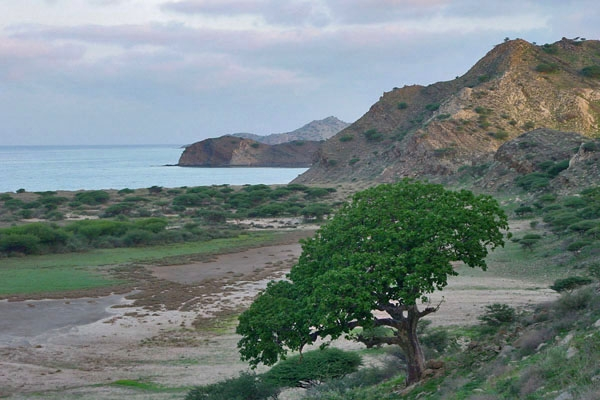 Send picture of Tree, mountains and sea at Dahlak archipelago from Eritrea as a free postcard
