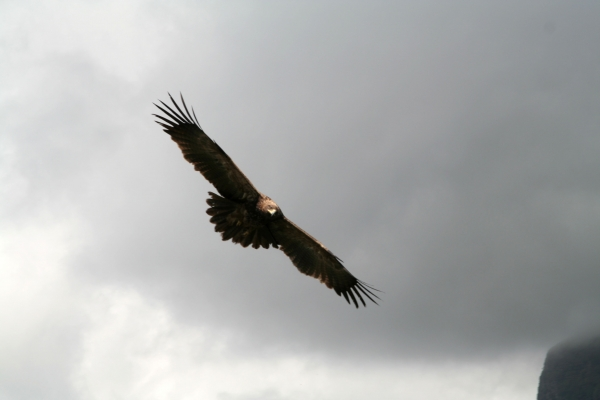Send picture of Eagle over the Simien mountains from Ethiopia as a free postcard