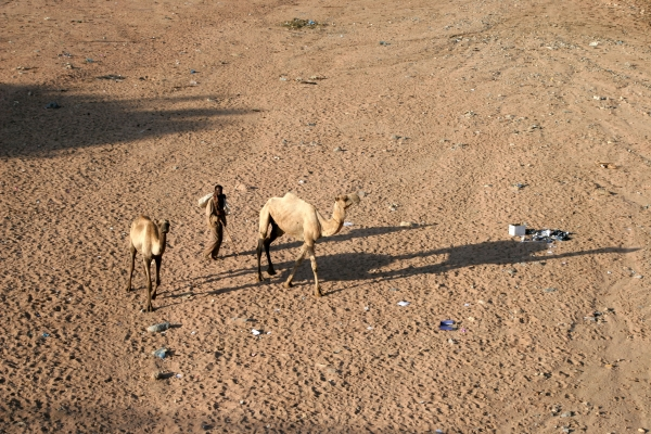 Send picture of Man with his camels in Dire Dawa from Ethiopia as a free postcard