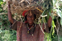 Foto van Woman carrying a pile of firewood - Ethiopia