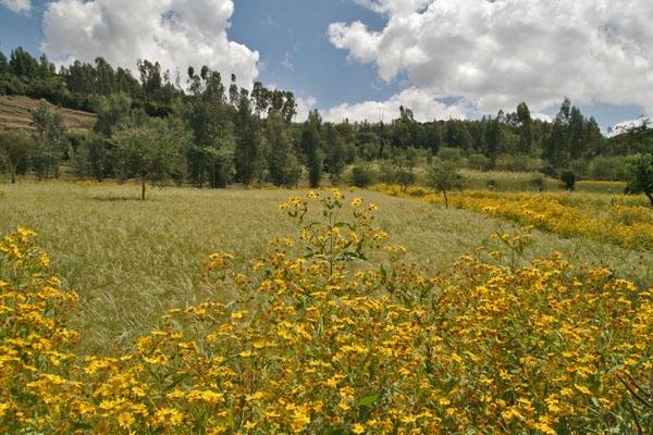 Spedire foto di Fields in Woldia di Etiopia come cartolina postale elettronica