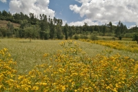 Picture of Fields in Woldia - Ethiopia