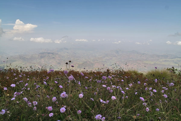 Spedire foto di Flowers in the Simien mountains di Etiopia come cartolina postale elettronica