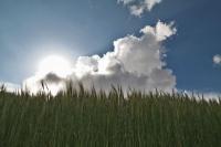 Fai clic per ingrandire foto di Clima in Etiopia