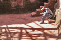 Picture of Man working as guard of one of the many churches in Lalibela - Ethiopia