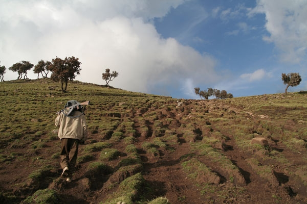 Stuur foto van Man working as scout for mountain trekkers in the Simien mountains van Ethiopië als een gratis kaart