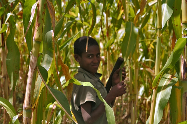 Boy working in the fields in Woldia to support his education