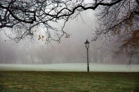 Picture of Foggy park in Bad Homburg - Germany
