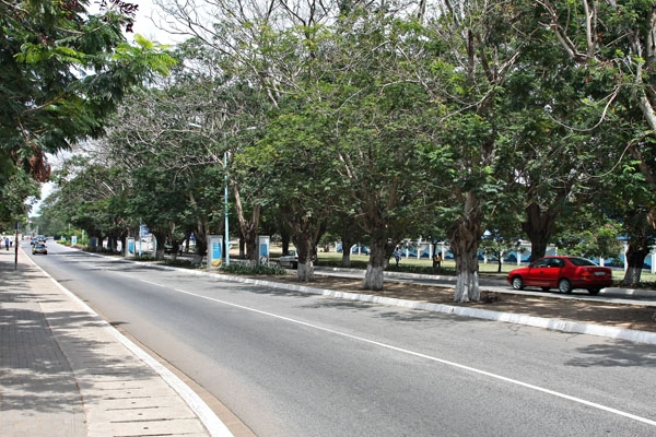 Send picture of Tree-lined street in Accra from Ghana as a free postcard