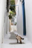 Click to enlarge picture of Animals in Greece