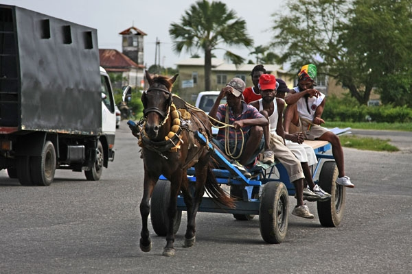 Send picture of Rastafaris on a horse cart in Georgetown from Guyana as a free postcard