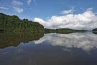 Click to enlarge picture of Nature in Guyana