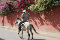 Picture of Man on a horse in a street in Comayagua - Honduras