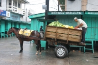 Foto van Fruit transport - Honduras