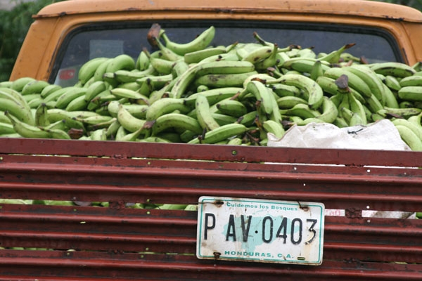 Send picture of A load of bananas from Honduras as a free postcard