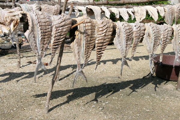  Fish hung to dry