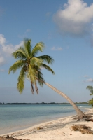 Picture of Utila Island - Honduras