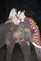 Foto van Elephant decorated for a religious Hindu festival - India