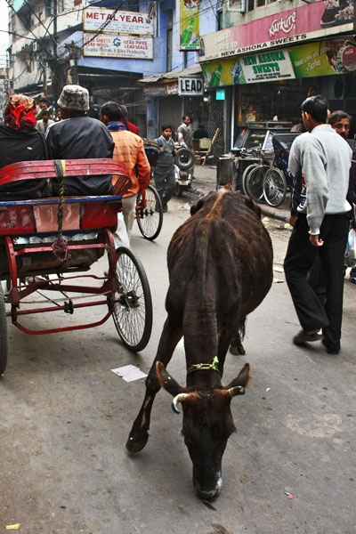 Enviar foto de A cow in the streets of Delhi de India como tarjeta postal eletrónica