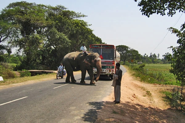 Send picture of Elephant crossing a road in Tamil Nadu from India as a free postcard