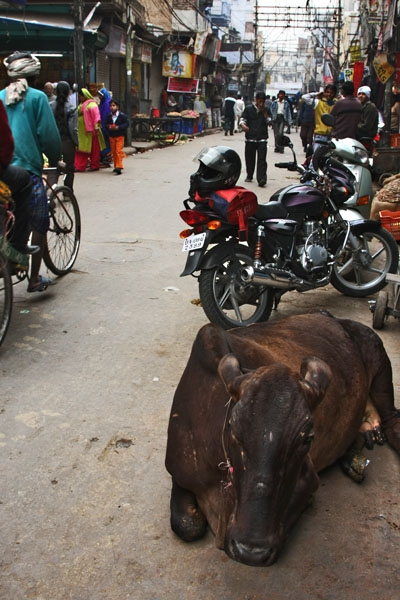 Send picture of Resting cow and motorcycles in Delhi from India as a free postcard