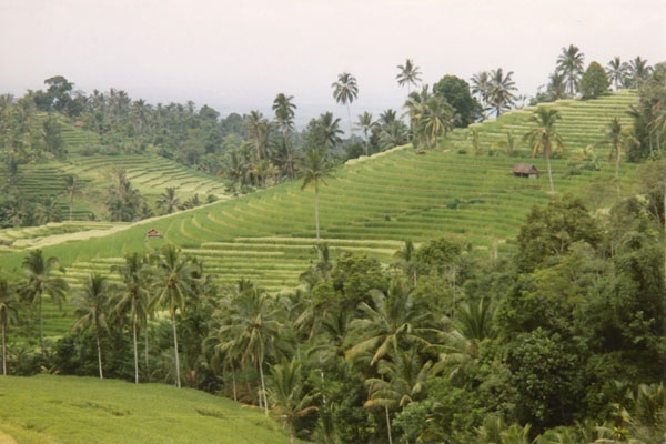 Send picture of Terraces on Bali island from Indonesia as a free postcard