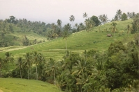 Foto di Terraces on Bali island - Indonesia