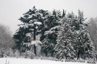 Foto de Snowy park in Northern Italy - Italy