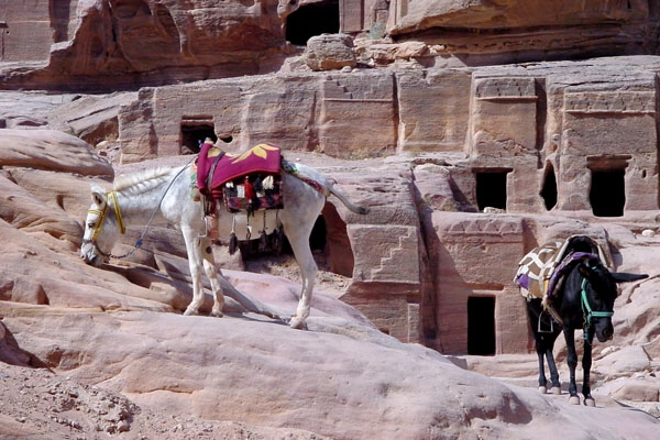 Send picture of Mules in Petra from Jordan as a free postcard