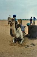 Photo de Camel near Mopti - Mali