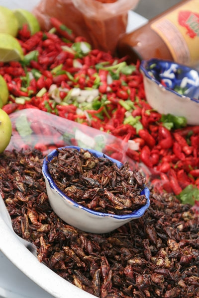 Send picture of Fried grasshopper in Mexico City from Mexico as a free postcard