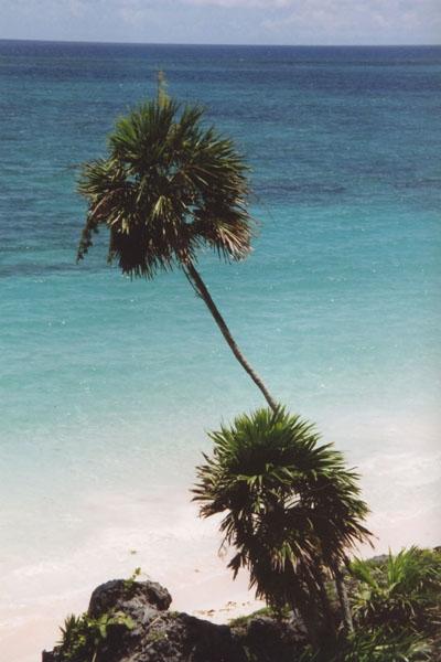 Stuur foto van Palmtree near Tulum van Mexico als een gratis kaart